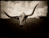 Longhorn Head, Liberty Texas